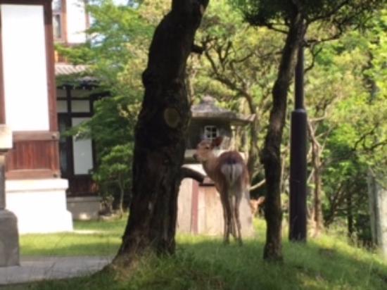Nara Hotel: 敷地内に鹿もきます