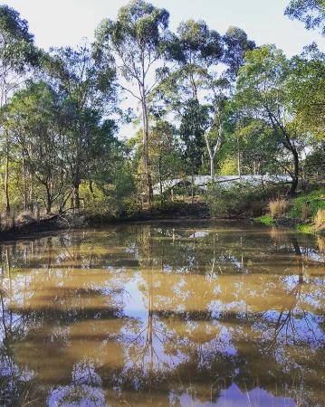 Pennyroyal, Αυστραλία: IMG_20160601_112816_large.jpg