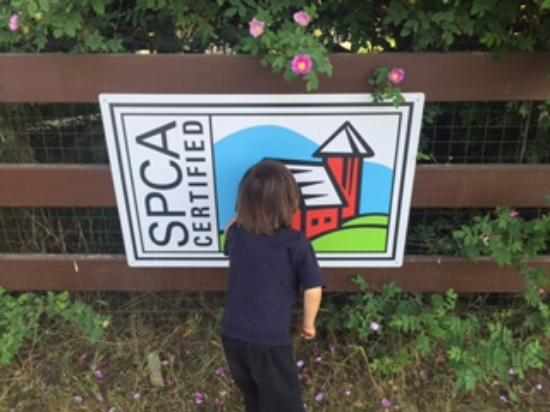 Cash checking out the SPCA Certified sign, Morningstar Farms