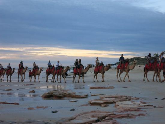 Ships of the Desert : camel ride