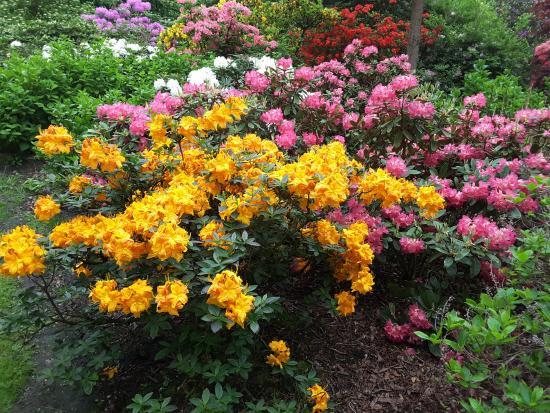 Rhododendronpark Bruns