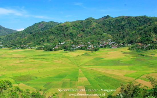 Lingko Spider Web Rice Fields - Walking Tours:   In Manggarai you will certainly notice the impressive lingko fields. The most amazing view ove