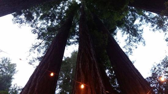 Ben Lomond, CA: mooie plek tussen redwood bmen