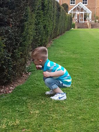 Chapel Brampton, UK: Rabbit watching