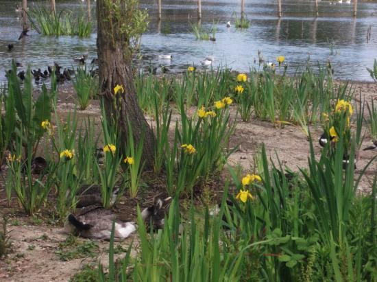 Baffins Pond