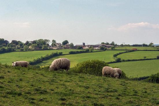 View from lane to Catsheys across to the village of Romansleigh
