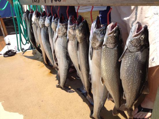 New Buffalo, MI: BOOM...Lake Trout. Lake Michigan is a trophy class lake trout fishery.