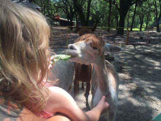 Green Meadows Petting Farm: photo1.jpg