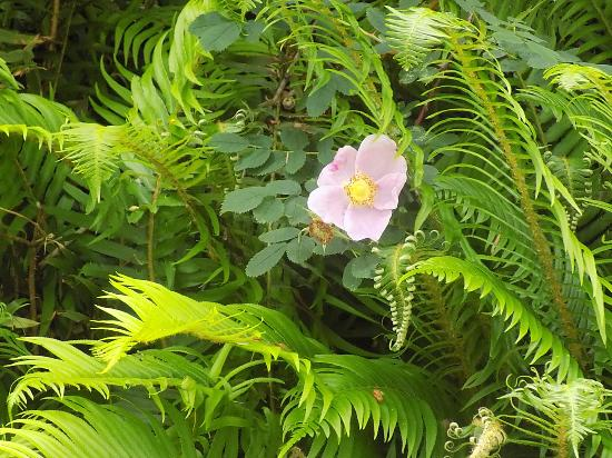The Lewis And Clark National And State Historical Parks: Wildflowers and ferns on a trail.