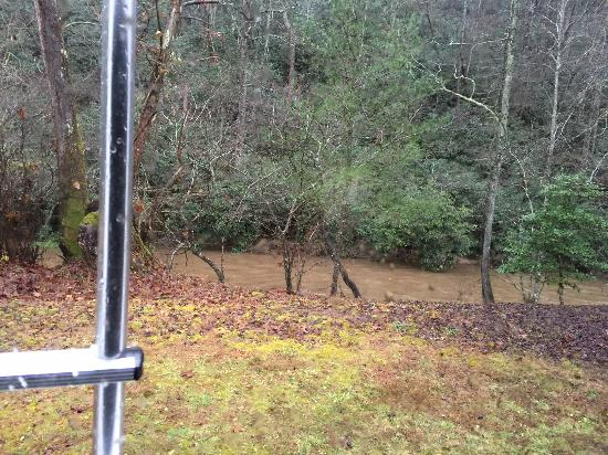 Ferguson, NC: View of the stream from my back window.