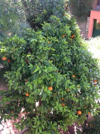Hotel Villa Linneo: Un oranger pris en photo de notre chambre