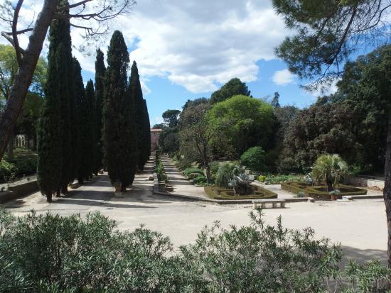 L 39 arbre souhait picture of jardin des plantes montpellier tripadvisor - Jardin d essence montpellier ...