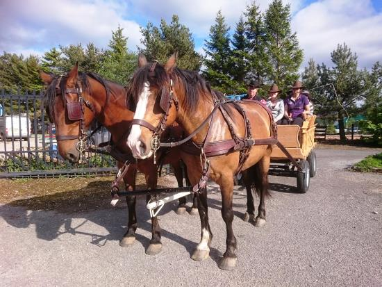 Kingussie, UK: Highland Horse Fun Cowboy Prairie Wagon