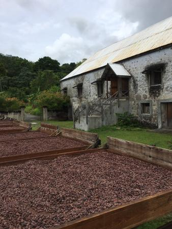 Saint Mark Parish, Grenada: The place is just gorgeous and they have delicious chocolate to sample and buy. A quick, free to