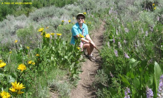 Sawtooth National Forest: Third Fork Trail