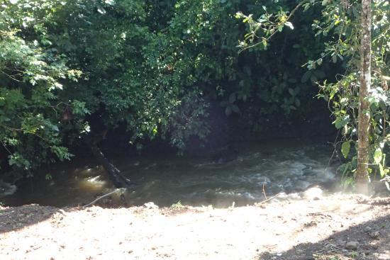 Sabalito, Costa Rica: River directly behind hotel