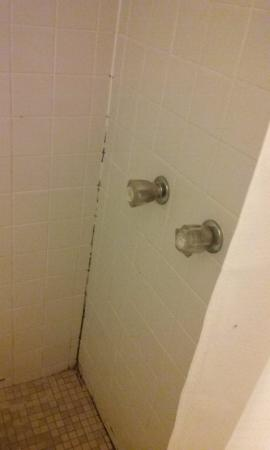 Fulton, MS: shower walls
