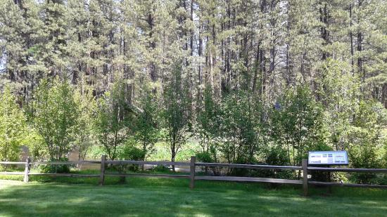 Cold Springs Resort and RV Park: more lawn by the Metolius river