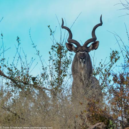 Mapungubwe National Park照片