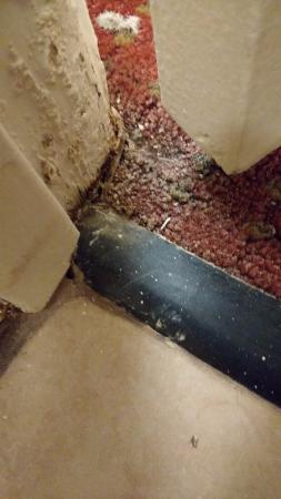 BEST WESTERN Chula Vista Inn: Marcos de las puertas y alfombras