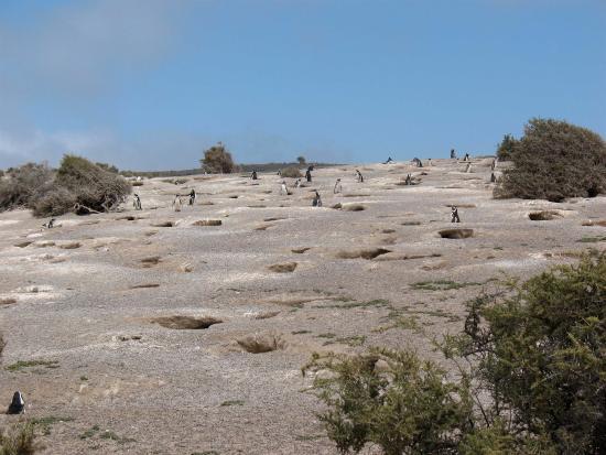 Dos Pozos, Argentina: Punta Tombo