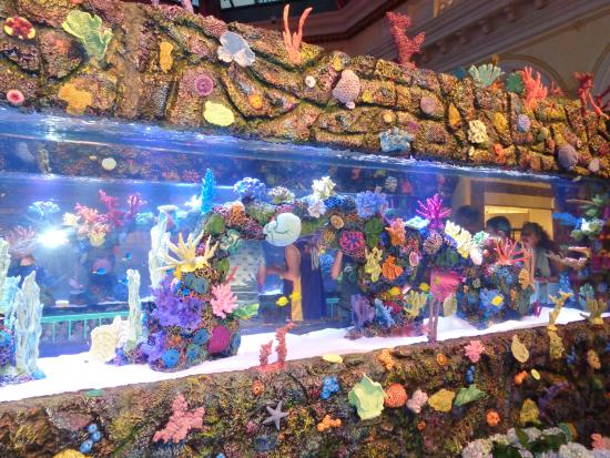 From the tv show tanked picture of bellagio conservatory for Fish tank show