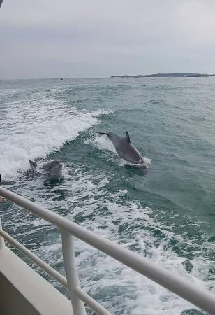 Rockingham Wild Encounters: The dolphins having a whale of a time