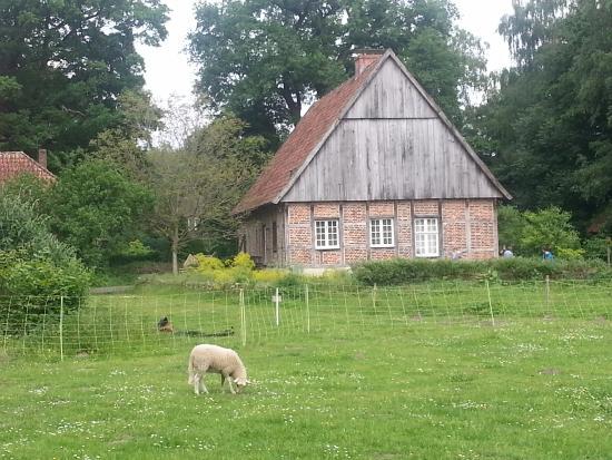 Mühlenhof-Freilichtmuseum: Muito verde e alguns animais