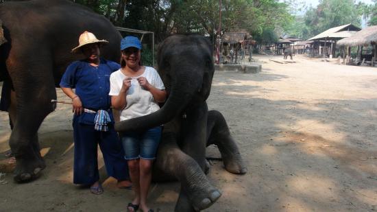 Jumbo Elephant Camp Day Tour: IMPRESSIONNANT