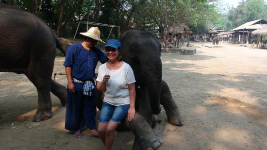 Jumbo Elephant Camp Day Tour: INTIMIDANT