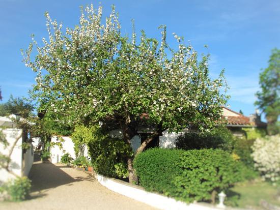 Saint-Paul-Lizonne, Frankrijk: Apple tree