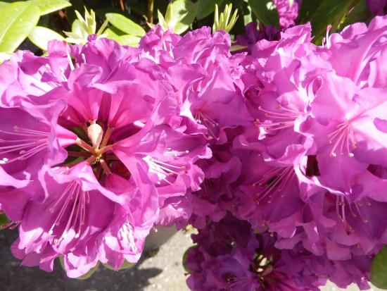 Sunken Gardens Park : Sunken Garden Park