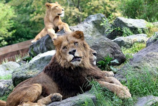 Safarier