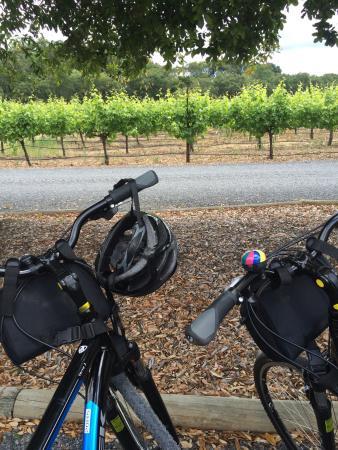Wine Country Bikes: photo8.jpg