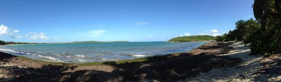 El Hotelito at the Rainforest Experience Farm: Vieques, you can catch the ferry only minutes away from the hotel!