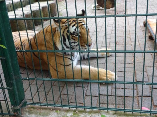 """Auch das gehört zur Anlage """"Waldeck"""", 6 Tiger"""