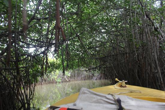 Pitchavaram Backwater Φωτογραφία