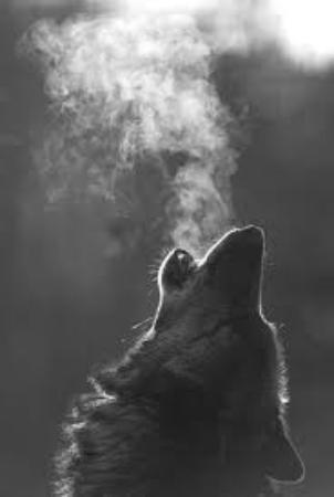 Wolf Den Safaris