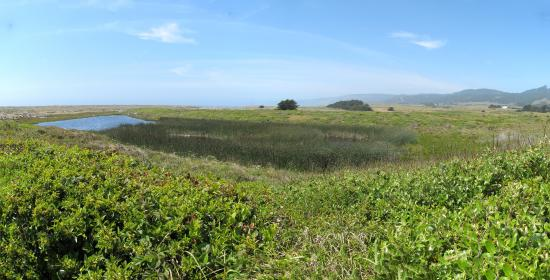 Manchester State Beach Campgrounds