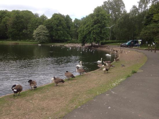 Bolton, UK: photo0.jpg