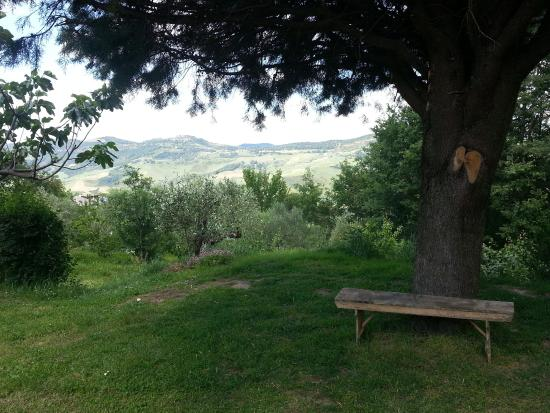 Aiuole giardino con ulivo aiuole giardino progettazione for Aiuola con ulivo