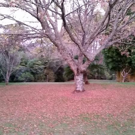 Oyster River Bed and Breakfast: Autumn splendor