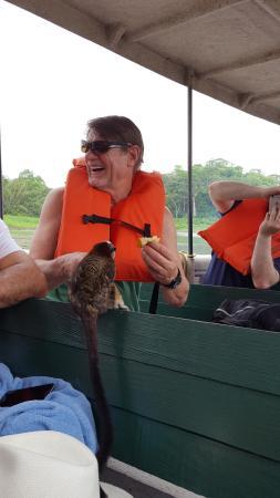 Jungle Land Panama: Day Excursions: Hungarian feeding hungry monkey