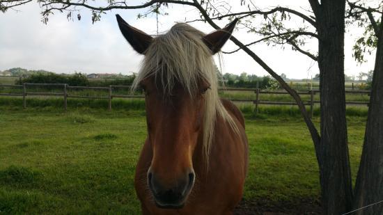 Sury-le-Comtal, ฝรั่งเศส: Лошадь