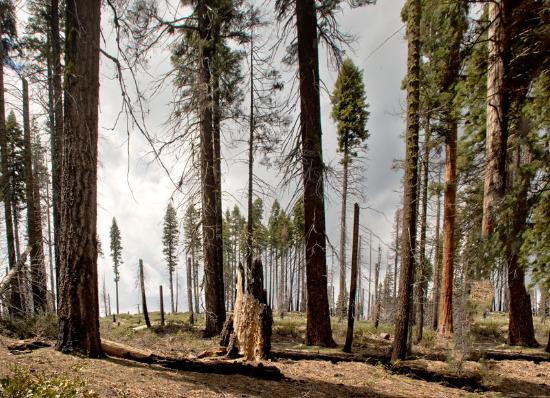 Three Rivers, Kalifornien: Areas of forest recovering from fires