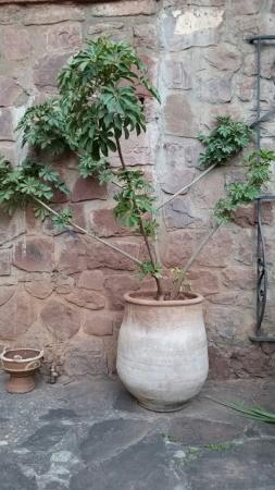 Ourika Garden: 20160413_193516_large.jpg
