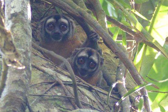 Ecological Jungle Trips: Monkeys