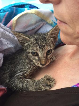 Boat Rental Miami: We rescued this kitten from the intracoastal, about 1/4 mile offshore.