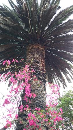 Tumbabiro, Ecuador: DSC_3474_large.jpg