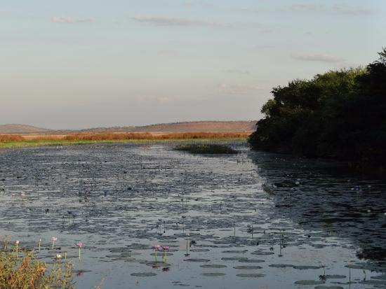 Wyndham, Australie : The billabong just after sunrise from the birdhird